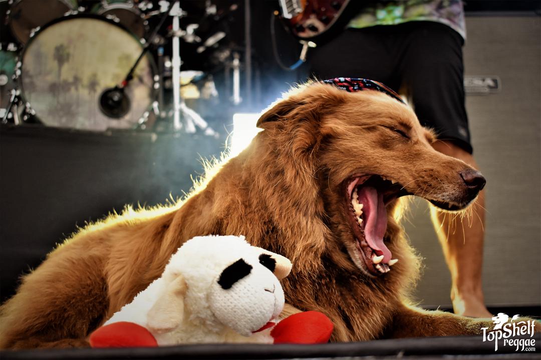 Cocoa the Tour Dog